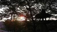 夏休みが始まりました - 優駿、大樹の下で和を奏でる~平屋暮らし*時々handmade~