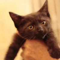 40℃ - 八幡地域猫を考える会
