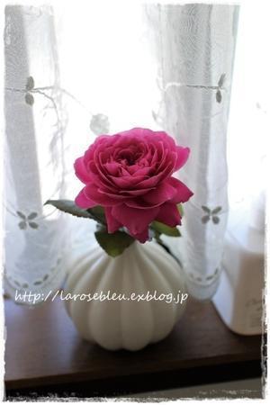 小窓の薔薇 - La rose 薔薇の庭