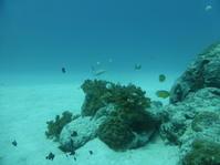 放浪の(?!)旅 - 沖縄本島最南端・糸満の水中世界をご案内!「海の遊び処 なかゆくい」