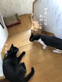 はちわれ猫の思い出 - gin~tetsu~nosuke