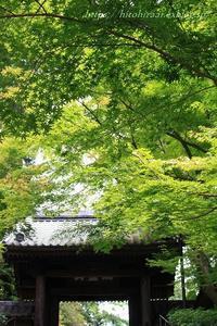 北鎌倉の円覚寺の門前フランス料理 - 暮らしを紡ぐ