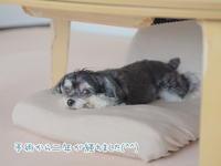 ミカの膝の手術を経て変わったこと - 犬のまいにち