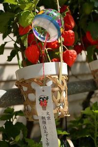 江戸から続く坂道で笑顔に出会う夏の市(文京朝顔ほおずき市) - 旅プラスの日記