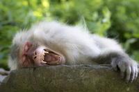 暑いですねぇ。。 - 相模原・町田エリアの写真サークル「なちゅフォト」ブログ!