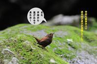涼しい~~ - Weblog : ちー3歩