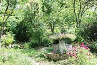 7月の裏庭 - ユリ 百合 ゆり 魚沼農場の日々