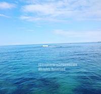 楽園 - surftrippper サーフィンという名の旅
