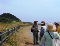 海辺の植物観察 - 千葉県いすみ環境と文化のさとセンター