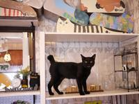 2018年7月22日ゆきねこ雑貨店開店予定のお知らせ。 - ゆきねこ猫家族
