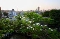 7月のベランダ - 東京ベランダ通信