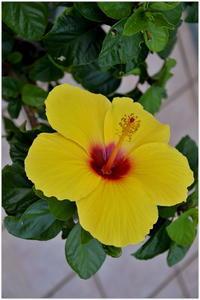 夏色の花 - caetla
