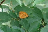 シーズン後半へ - 蝶と蜻蛉の撮影日記