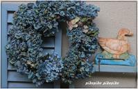 蒼い紫陽花のリース - 今が一番