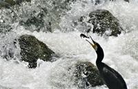 灼熱の川辺で狩り - ベジタブルpartⅤ(鳥と共に日々是好日)