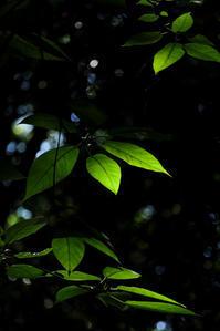 蛍火の森 - memory