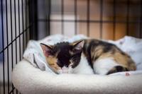 メルの写真館2018 - おまけ猫たちとの日常
