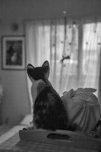 メルと亡き姉たち - おまけ猫たちとの日常