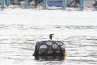 漁港のササゴイ - いい男の「歩々是道場」