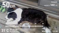 【犬】朝から暑いね - 人生を楽しくイきましょう!
