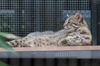 真夏の井の頭~ありがとうダイフク - 続々・動物園ありマス。