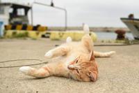 漁港の猫たち2018.05.12/05.13 - ちわりくんのありふれた毎日II