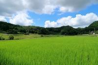 夏の色 - ~葡萄と田舎時間~ 西田葡萄園のブログ