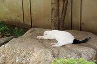 最近の猫事情58 - 鳥会えず猫生活