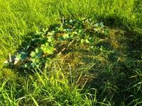 南国畑で1時間半・・・体温37度 - 化学物質過敏症・風のたより2