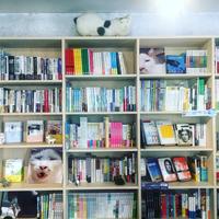kindle版発売記念うちの猫ら写真展。 - ぶつぶつ独り言2(うちの猫ら2018)