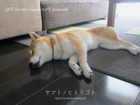 猛暑日は部屋でゴロゴロ♪【動画あり】 - yamatoのひとりごと