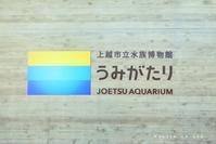 JOETSU AQUARIUM - 木の葉のオト