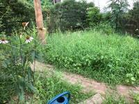 草がぼーぼー - 半日陰の家庭菜園