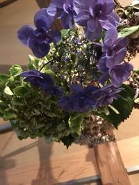 紫陽花、再び・・・「何とかこのまま枯らしてしまう事、ナカレ!」編 - 納屋Cafe 岡山