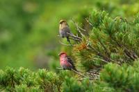 三度目の正直 ^^; - 北の大地で野鳥ときどきフライフィッシング