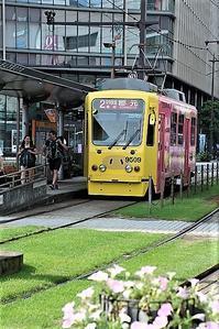 藤田八束の鉄道写真@鹿児島の街、路面電車が走る・・・美しい花達と路面電車、西郷どんの街 - 藤田八束の日記