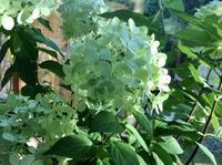 やさしいペパーミントグリーンに癒されて - ローズ&ハーブの小さなおもてなしサロン~ligare flora~