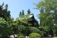 芦ノ湖西側稜線コースを歩くその10 - 季節(いま)を求めて