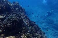 18.7.24探検ダイブ - 沖縄本島 島んちゅガイドの『ダイビング日誌』