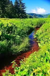 湿原夏の流れ - 風の香に誘われて 風景のふぉと缶