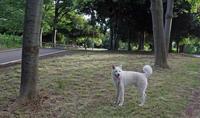 みーん - 小太郎の白っぽい世界