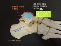『全身の関節16』足首の関節 (距腿関節) その2 - 整体院 GRAN SPACE からだブログ