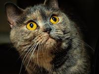 サビ猫 - 日々+[HiBi+]