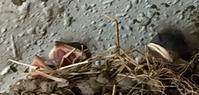 みにくい燕のひな - 美は観る者の眼の中にある