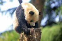 なんとかの夏、日本の夏 - 動物園のど!