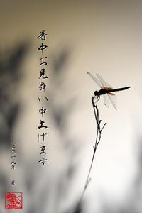 ☆ 暑中見舞い ☆ - ON ANY SUNDAY 2.............