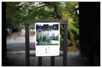 散歩寺町通 - Hare's Photolog