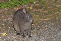 アマミノクロウサギ目指してナイトドライブ - 元 子連れバーダーの日々 BLOG