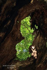 樹洞 - ある日の足跡