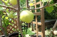 2校インターンシップ(夢前高校、県農高校) - 手柄山温室植物園ブログ 『山の上から花だより』